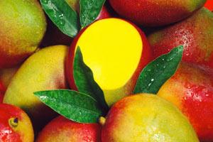 mumbai-mango fiascogelato dot ca