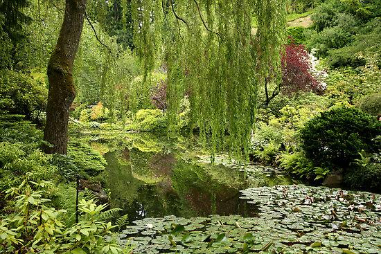 """""""Butchart Gardens in the rain"""" by Matt Emrich. Source: Redbubble.com"""