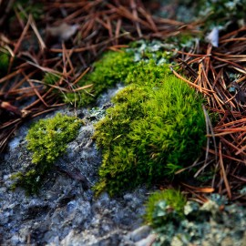 Fresh moss and lichen. Source: Lars Dahlin at Flick.