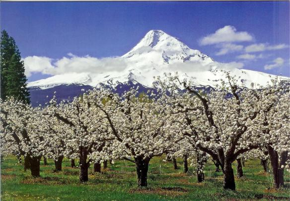 Pear Orchard mt-hood-orchards-of-hood-river-valley Darryl Lloyd, Long Shadow Photography