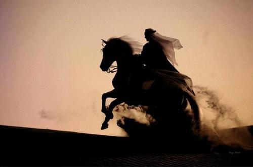 Arabian Horse tumblr_m7dtkdCrFl1rwt5gqo1_500