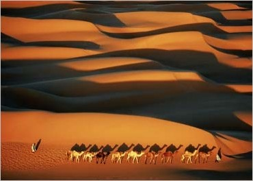 Camel Caravan. Photo by Yann Arthus-Bertrand.
