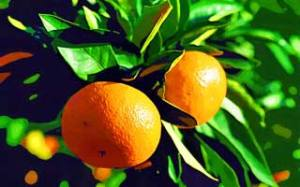 Oranges via Yun free photos
