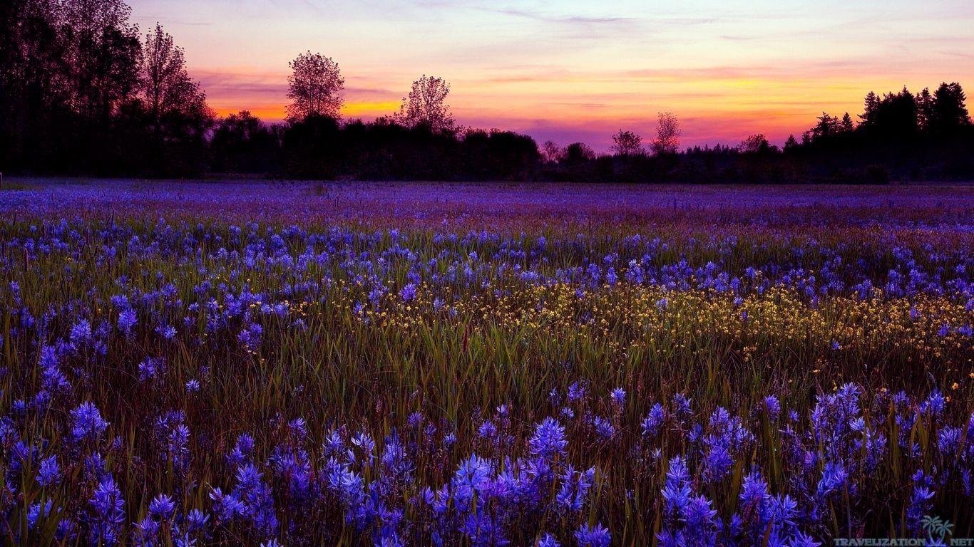 Perfume review serge lutens de profundis purple twilight for Immagini sfondo desktop primavera