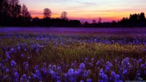Sunset meadow via freewallpapers at travelization.net