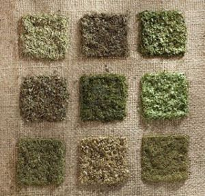 dried green herbs