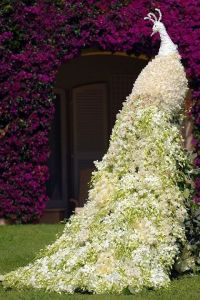 Jasmine peacock created from jasmine flowers. Source: Hdwallpaperes.com