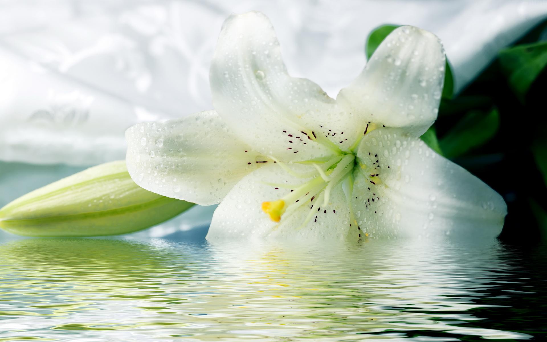 Perfume review le labo lys 41 dancing floral princesses source kootation dhlflorist Images