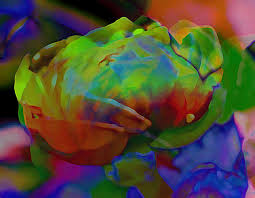 Abstract Rose by James-Chesnick via kootation.com
