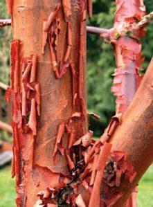 Cinnamon tree bark. Source: indiamart.com