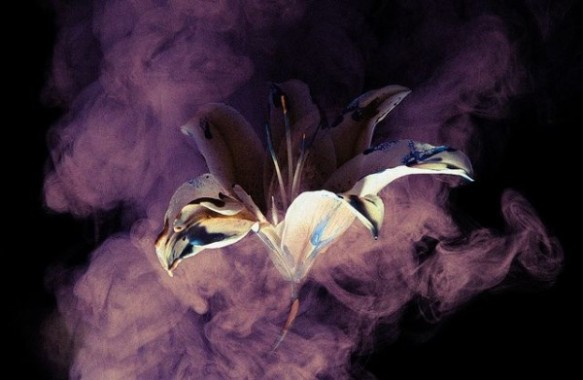 "Photo: Henry Hargreaves Photography. ""Smoke and Lily"" series. Source: Trendland.com http://trendland.com/henry-hargreavess-smoke-and-lily-photography/"