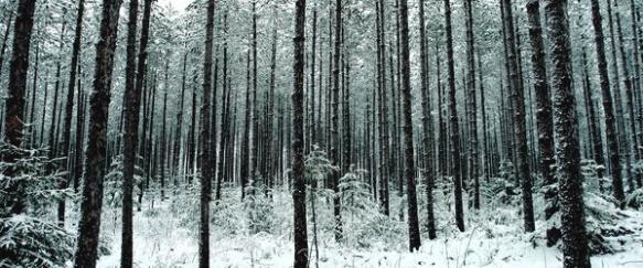 Pine Forest by Brandt Wemmer. Source: Fineartamerica.com