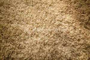 Taupe shag carpeting. Source: stockphotopro.com