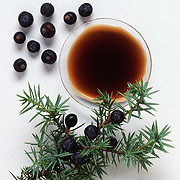 Cade oil from a juniper tree. Source: purearomaoils.com