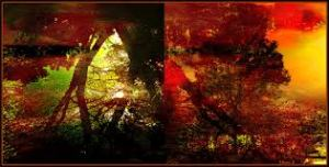 """""""Autumn Abstract."""" Photo: Tim Noonan via Flickr. (Website link embedded within photo.)"""