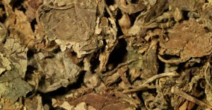 Dried Indonesian patchouli leaves via Dior.com.