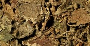 Dried Indonesian patchouli leaves via Dior.com.