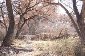 """""""Dusty Woods"""" by Brenejohn on DeviantArt. brenejohn.deviantart.com"""