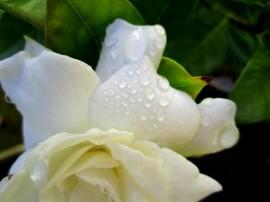 Photo: onewomanshands.blogspot.com