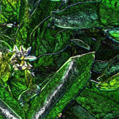 "Petitgrain art, ""Young at Heart"" via aromatherapy4soul.com -"
