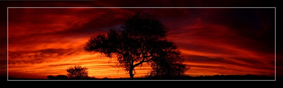 "Photo: ""Fiery Mesquite Sunset"" by Delusionist on Deviant Art. http://delusionist.deviantart.com/art/Fiery-Mesquite-Sunset-13859523"
