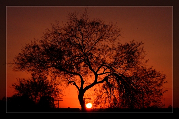 "Photo: ""Mesquite Tree Sunset"" by Delusionist on Deviant Art. http://delusionist.deviantart.com/art/Mesquite-Tree-Sunset-13878618"