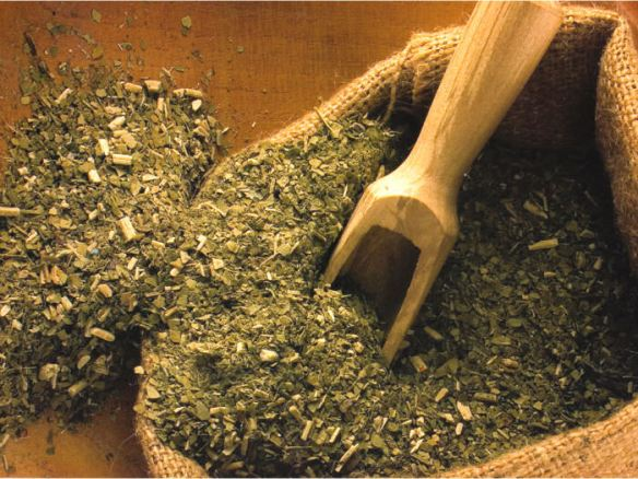 Mate or Yerba Mate. Source: theplanteater.com